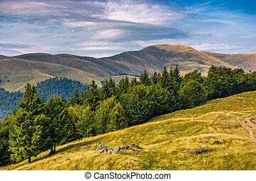 forested hillside of Svydovets mountain ridge. lovely summer...
