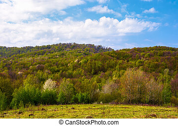 forested hillside on a fine weather. beautiful nature...