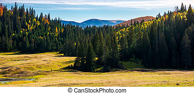 forested landscape in autumn. spruce trees on the meadow....