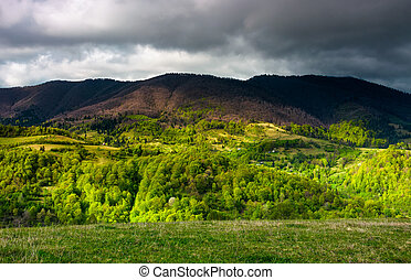 forested mountain slopes in springtime. lovely countryside...
