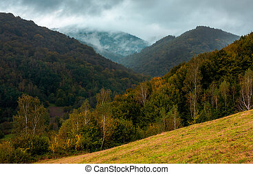 forested mountains in autumn. cloudy and foggy weather....
