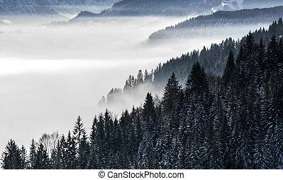 forested, pendio montagna, in, basso, dire bugie, valle, nebbia, con, silhouette, di, sempreverde, conifere, ha celato, in, mist., scenico, nevoso, paesaggio inverno, in, alpi, baviera, germany.