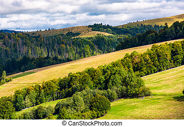 forested rolling hill on a cloudy day. lovely nature scenery...