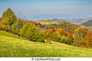 forested rural hillsides in autumn. trees with red foliage...