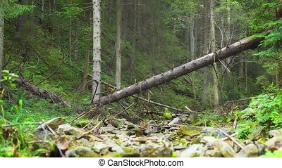 Forested Slope over Rocky Stream Bed in Carpathian Mountains...