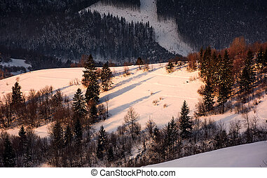forested snowy hillside in morning light. lovely winter...