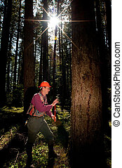 Forester in a Pacific Northwest forest - Forester marking...
