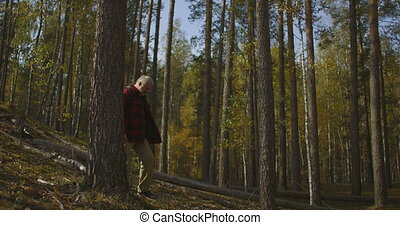 forester is walking in woodland at autumn, checking forest ...