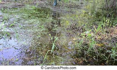 forester swamp