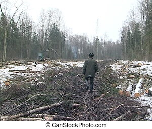 forester woodward ranger walks among tree cut branches and...