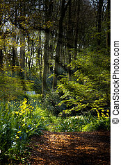 Forestpath in spring with flowers and sunrays