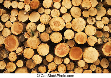 A stack of felled trees or logs in a land managed forestry clearing