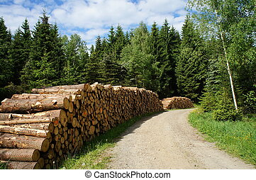 Forestry in the Erzgebirge - A forest path in the Erzgebirge...