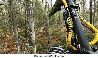 Forestry. View of logger cuts tree in forest - Timber...