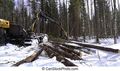 Forestry. View of logger loads trunks in forest - Forestry....