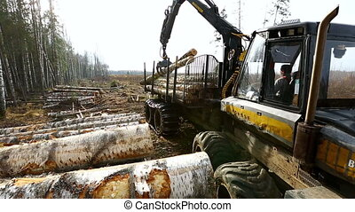 Forestry. View on logger unloads lumber in forest -...