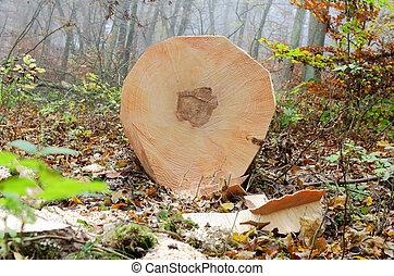 Forestry work - a freshly cut tree