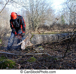 Single foretsry worker working with a tree