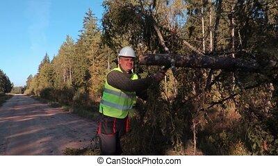 Forestry worker try to fix fallen spruce