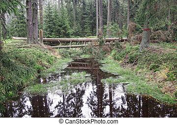 Forests in peat bogs Kladska. Kladska peats - Glatzener Moor- is a national nature reserve in Slavkov Woods - protected landscape area. Slavkov Forest - Kaiserwald - is geomorphological unit in the northern part of the Carlsbad Highlands. Kladska, Czech republic.