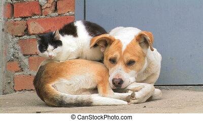 forever., amitié, chien, cat.