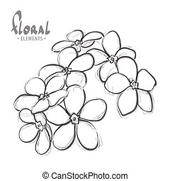 forget-me-a white background - me-nots on a white background...