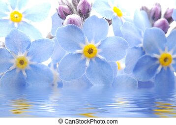 Forget me not flower - Close-up of blue Forget me not flower...
