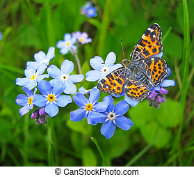 Forget me not flowers and butterfly