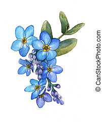 Forget-me-not flowers bouquet isolated on white background....