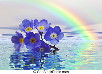 Forget me not - A discarded forget-me-not floats on the...