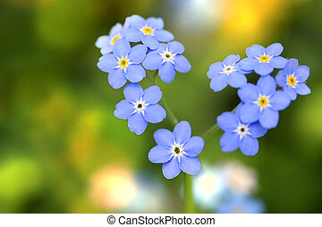 Forget me not, small flowers in the shape of a heart
