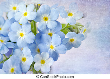 Forget me not on blue background