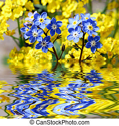 Forget-me-not with reflection in wa