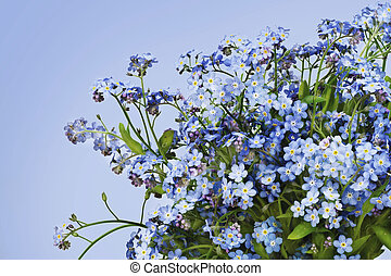 background from first spring flowers of forget-me-nots (Myosotis) image