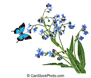 Forgetmenot and Butterfly