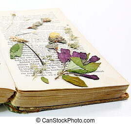 Forgotten blossom in old book