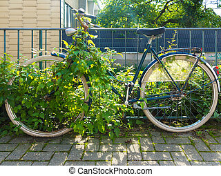 forgotten run-dwon rusty old bicycle overgrown by plants