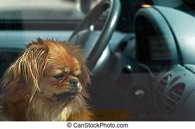 Forlorn - Dog left in the car
