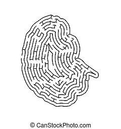 formé, blanc, silhouette, compliqué, isolé, noir, labyrinthe, cerveau