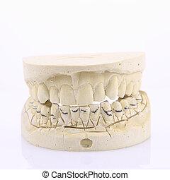 form, menschliche zähne