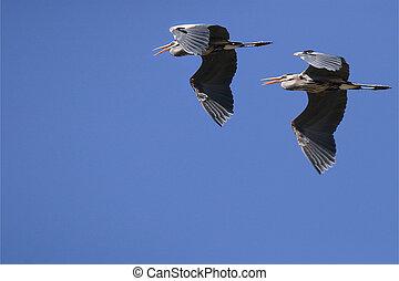 formação voadora