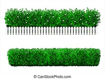 forma, arbusto, verde, seto
