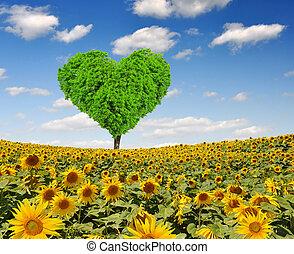 forma coração, árvore