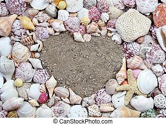 forma corazón, conchas de mar