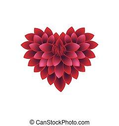 forma corazón, flores, rojo, dalia
