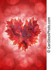 forma corazón, permisos de arce, fondo rojo