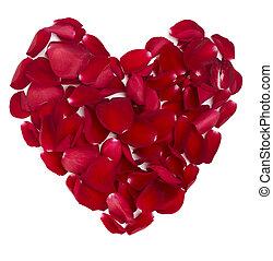 forma cuore, petali rose, fiore, amore, valentina, giorno