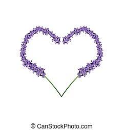 forma, lavanda, corazón, marco, flores, púrpura