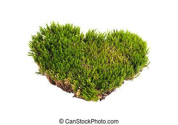 forma, primer plano, corazón, aislado, musgo, verde, ...