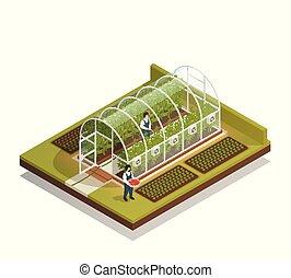 formado, composición, isométrico, túnel, invernadero